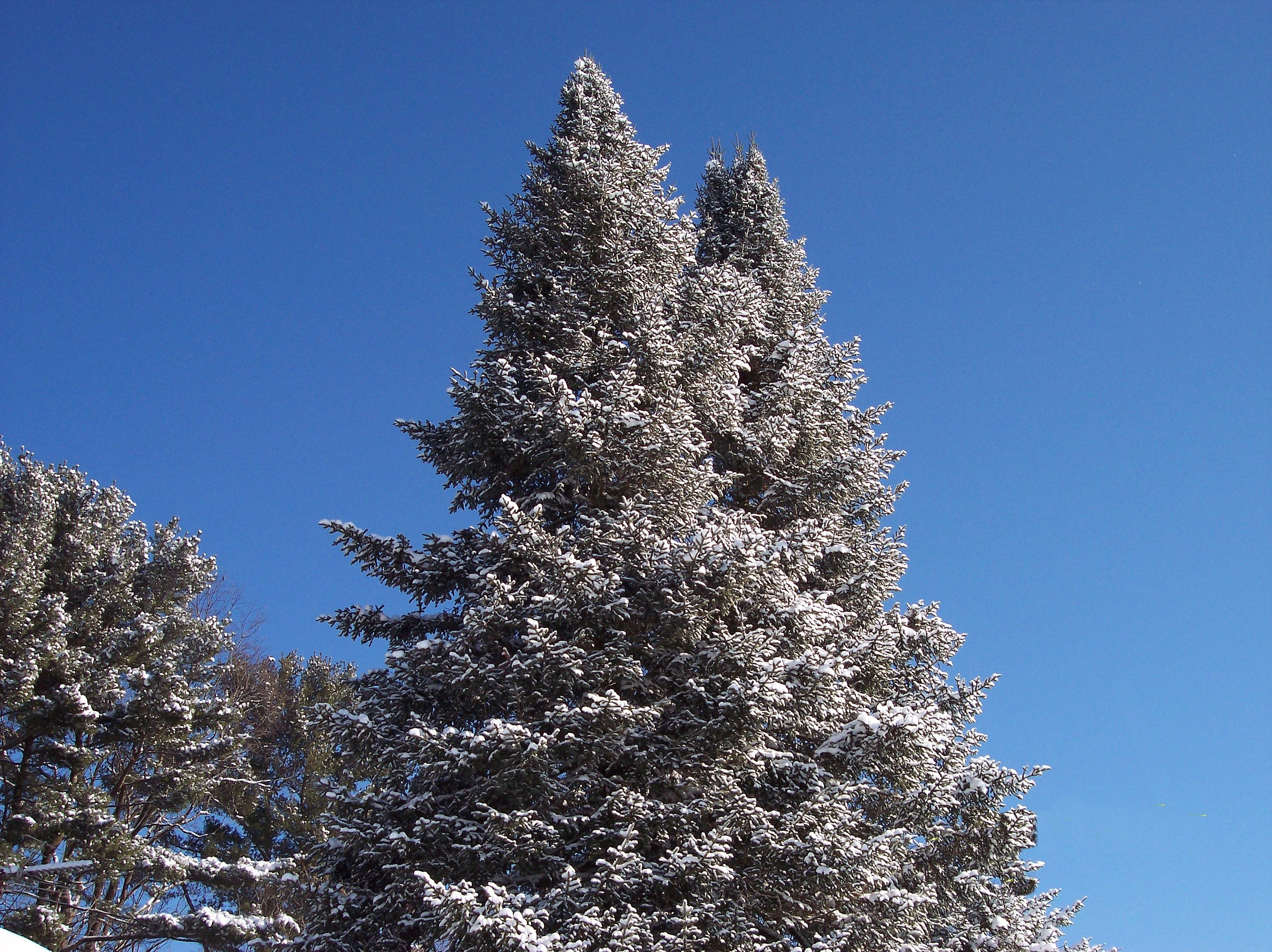 Holiday blues, Christmas stress