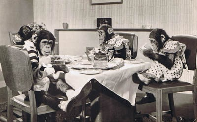 Surviving The Festive Season When Sat At The Table With A Bunch Of Monkey Minds!